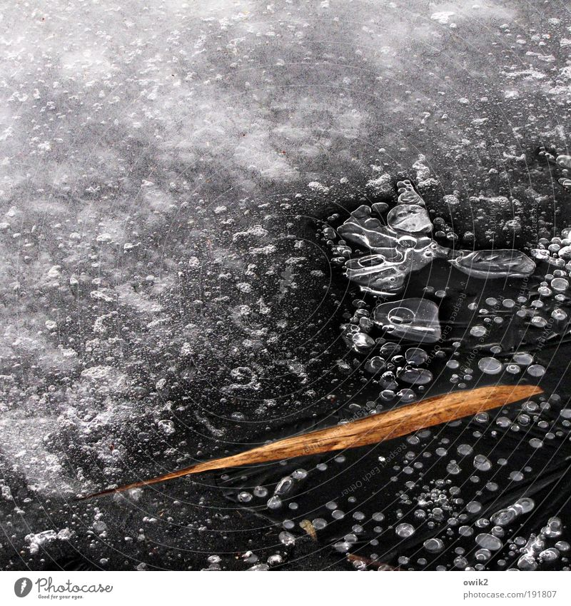 Nature White Plant Winter Calm Leaf Black Gray Lake Ice Wait Environment Frost Peace Simple
