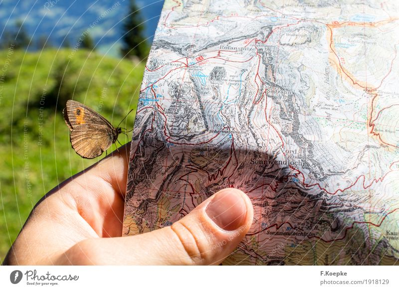 Discover nature Hand 1 Human being Newspaper Magazine Reading Nature Animal Summer Alps Mountain Butterfly Wild animal Flying Hiking Happy Happiness