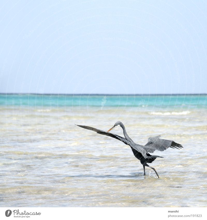 Nature Water Sky Ocean Blue Summer Beach Animal Gray Bird Weather Feather Wing Hunting Appetite Fishing (Angle)