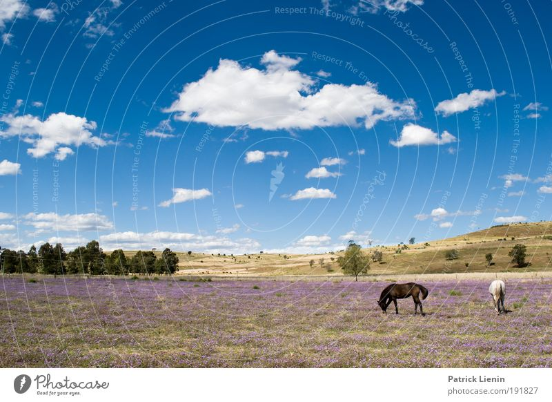 Nature Sky Tree Blue Summer Vacation & Travel Calm Clouds Animal Far-off places Meadow Grass Freedom Landscape Air Hiking