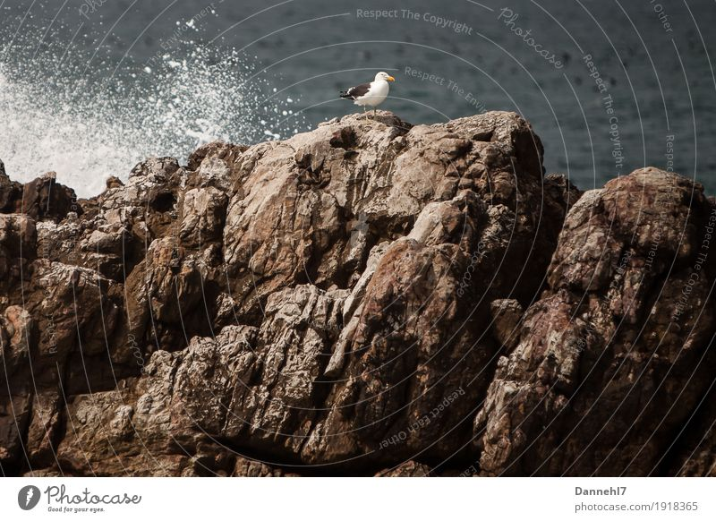 The Seagull II Water Beautiful weather Rock Ocean Island Bird Flying Stand Maritime Blue Brown Gray Black White Contentment Longing Loneliness Freedom Trust