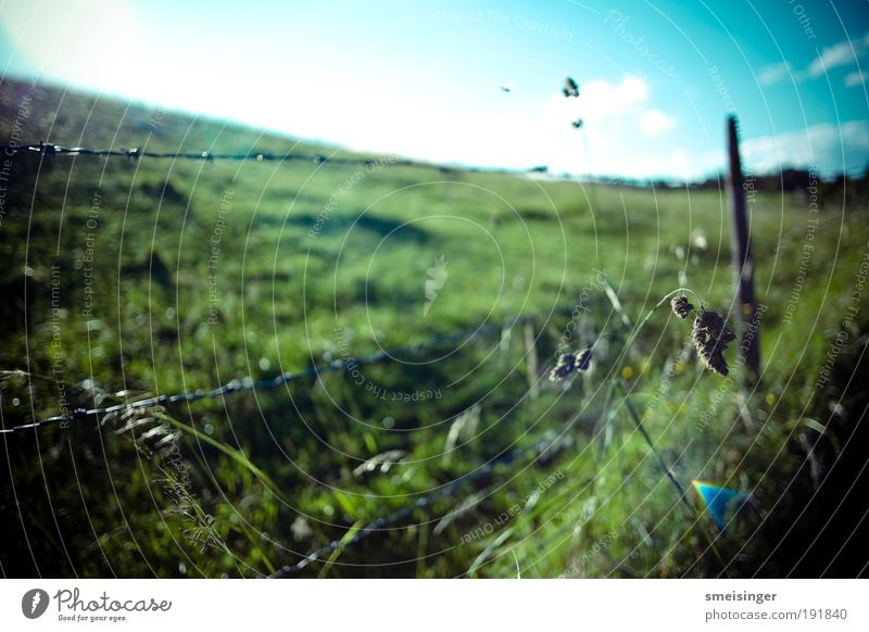 barbed wire Nature Plant Sky Sun Summer Beautiful weather Grass Foliage plant Meadow Field Blue Green Unwavering Barbed wire fence Pasture Agriculture Fenced in
