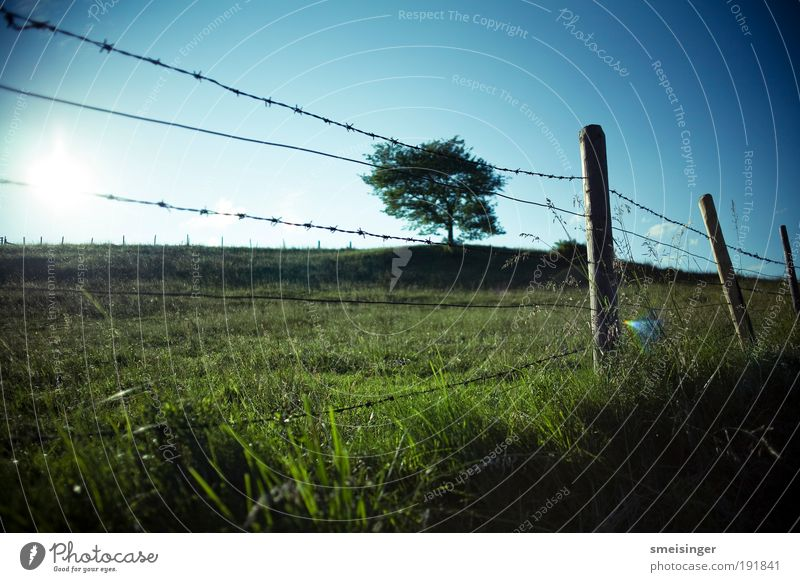 barbed wire with tree Nature Landscape Plant Sky Cloudless sky Sun Summer Beautiful weather Tree Grass Foliage plant Meadow Field Vacation & Travel Idyll