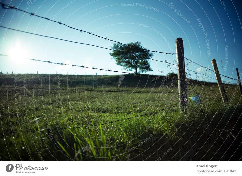Nature Sky Tree Sun Plant Summer Vacation & Travel Meadow Grass Landscape Field Arrangement Idyll Border Pasture Fence