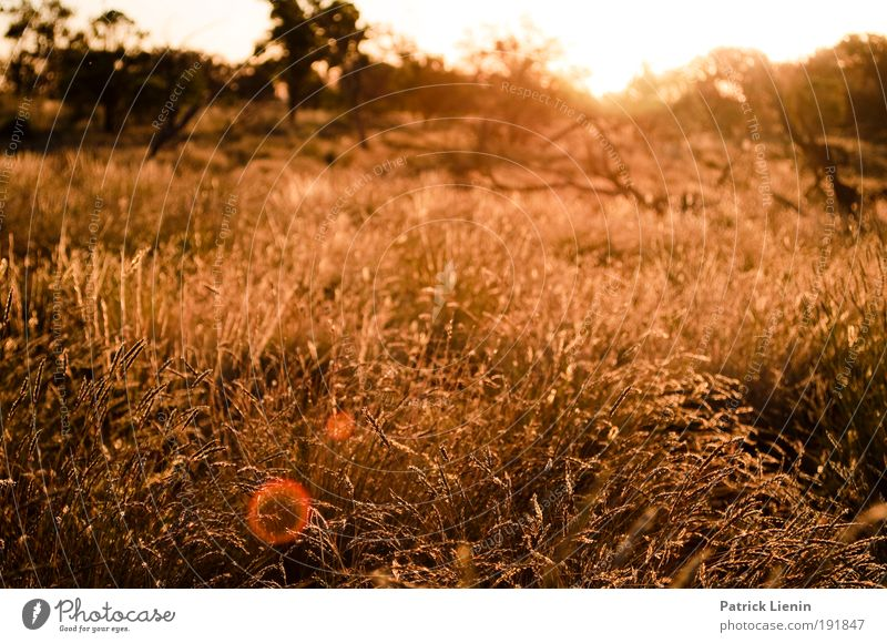 Nature Plant Summer Far-off places Meadow Environment Landscape Grass Moody Australia Bushes Desert Hot Drought Lens flare Evening