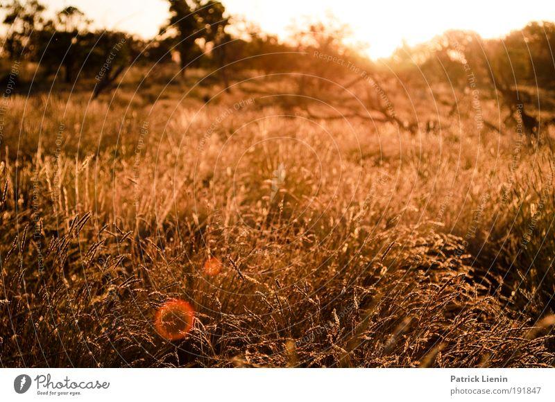 summer evening Summer Environment Nature Landscape Plant Bushes Wild plant Meadow Desert Moody Hot Outback Sunset Colour photo Exterior shot Evening Light
