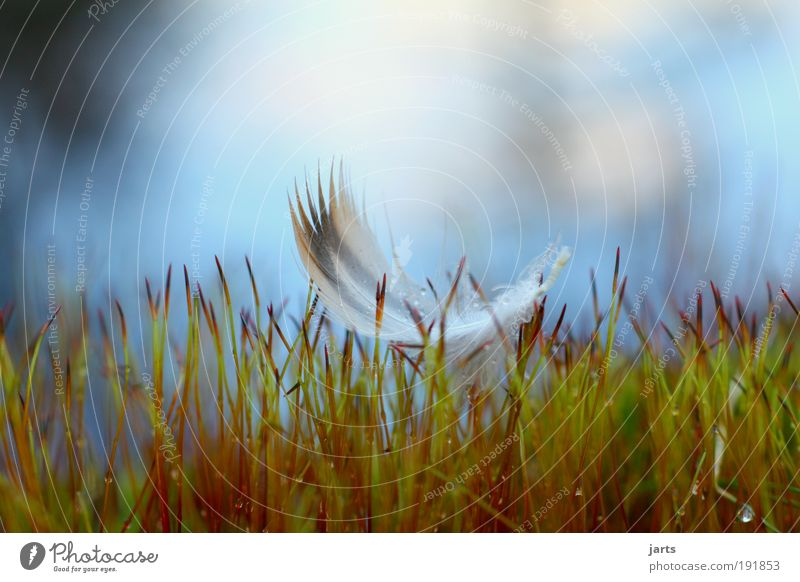 Nature Calm Freedom Grass Dream Bird Elegant Flying Free Feather Peace Serene Easy Hover Macro (Extreme close-up) Moss