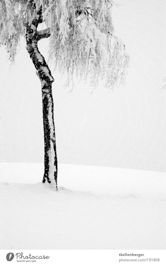 winter never ends IV Nature Plant Clouds Winter Climate Fog Ice Frost Snow Tree Birch tree Park Freeze Stand Wait Thin Cold Gray Black Relaxation Calm