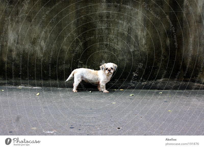 Loneliness Animal Dog Sadness Longing Pelt Curiosity Pet Puppydog eyes