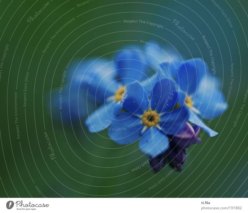 Don't forget me Environment Nature Landscape Animal Spring Summer Climate Beautiful weather Plant Blossom Wild plant Forget-me-not Park Meadow Field Blossoming