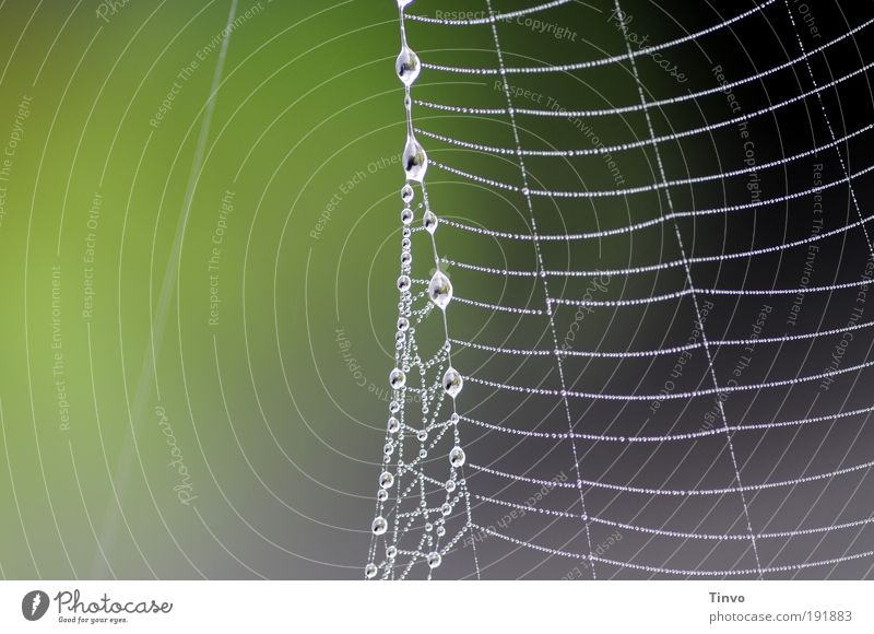 At the silk thread Environment Nature Drops of water Gray Green Pearl necklace dew drops Dew Net Network Ladder Climbing Catching net Spider's web Delicate