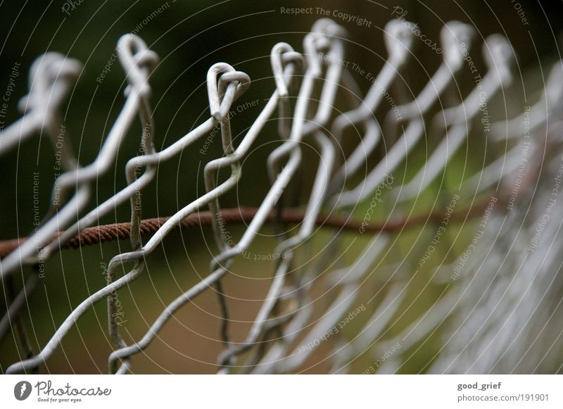 Winter Grass Garden Freedom Park Fear Fear of death Fear of the future Fence Village Rust Iron Wire Wire netting fence Wire cable