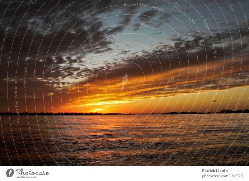 Sky Sun Clouds Calm Air Contentment Trip To enjoy River bank Dusk Elbe Cruise Sunrise City trip Blankenese Warm light