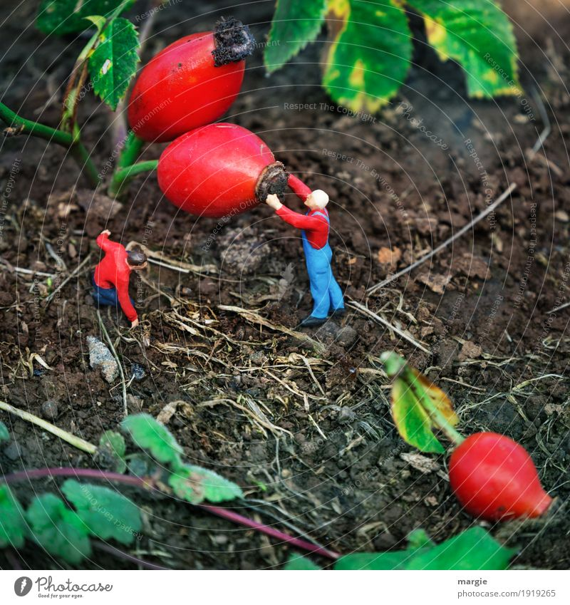 Miniwelten - Rosehips Work and employment Profession Gardening Agriculture Forestry Services Health care Human being Masculine Man Adults 2 Nature Plant Animal