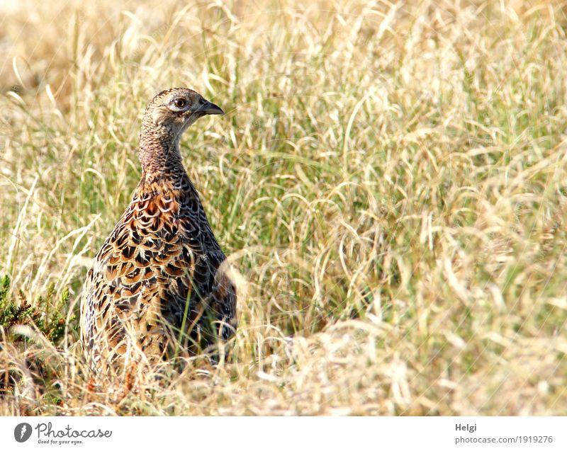 Nature Vacation & Travel Plant Summer Green Landscape Animal Calm Baby animal Warmth Environment Life Natural Grass Brown Bird