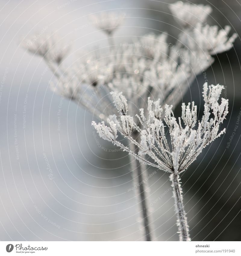 Mr. and Mrs. Frost Environment Nature Plant Winter Climate Weather Ice Bushes Cold Frozen Hoar frost Subdued colour Exterior shot Deserted Day
