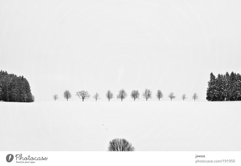 order Winter Snow Winter vacation Nature Landscape Plant Weather Ice Frost Tree Esthetic Far-off places Cold Beautiful Gloomy Black White Calm Relaxation