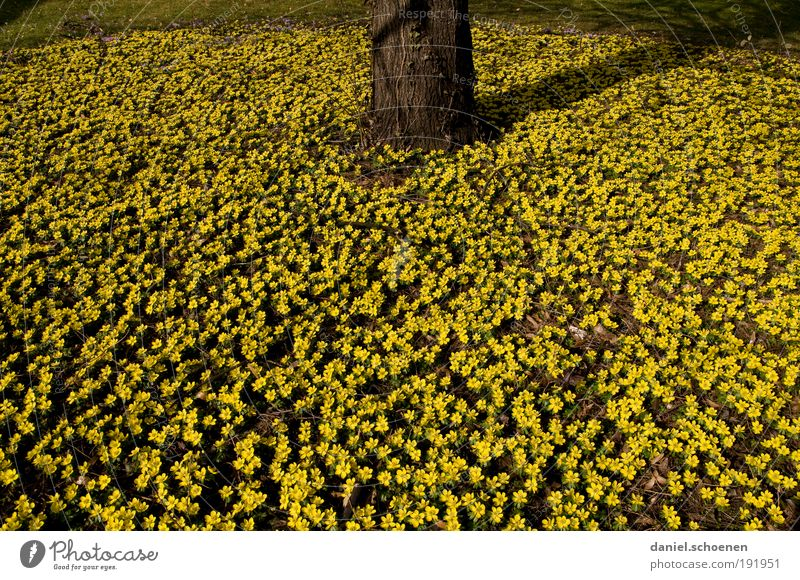 without words Nature Plant Spring Flower Blossom Yellow Growth Tree Tree trunk Many