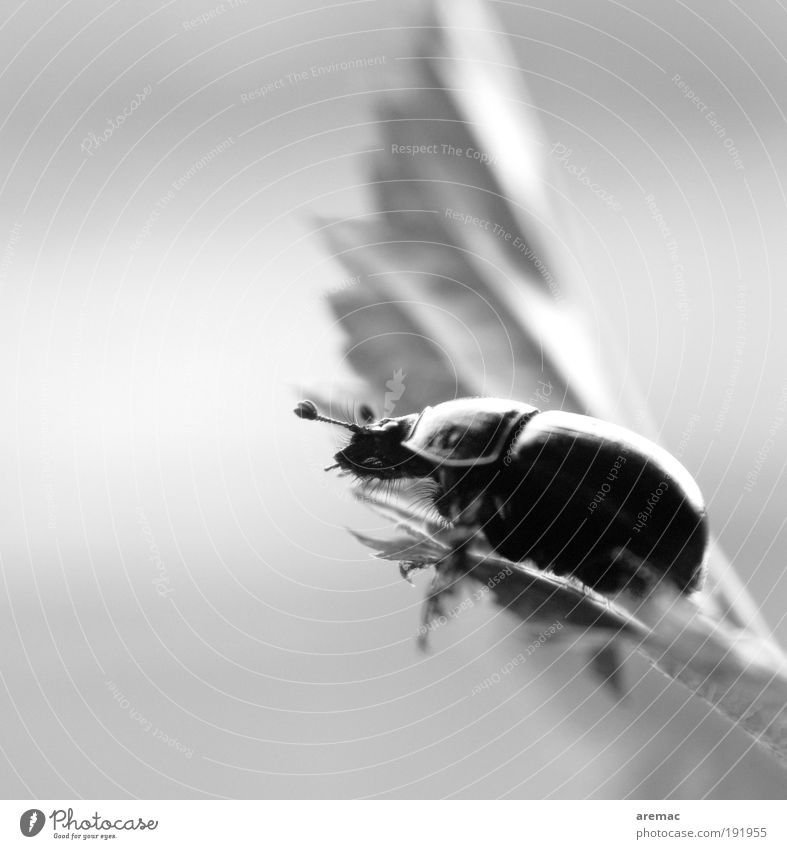 Nature White Leaf Black Animal Relaxation Moody Sit Beetle Insect Macro (Extreme close-up) Black & white photo