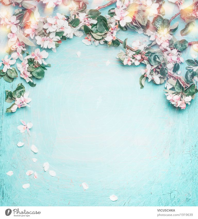 Nature Plant Blue Beautiful Flower Leaf Blossom Love Spring Background picture Style Feasts & Celebrations Design Pink Decoration Elegant