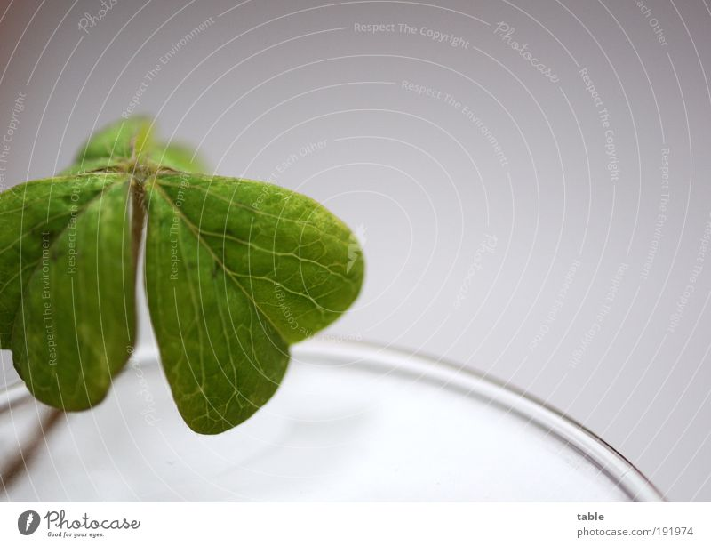 Beautiful Green Plant Leaf Emotions Happy Contentment Hope Esthetic Growth Future Clean Pure Trust Desire Curiosity