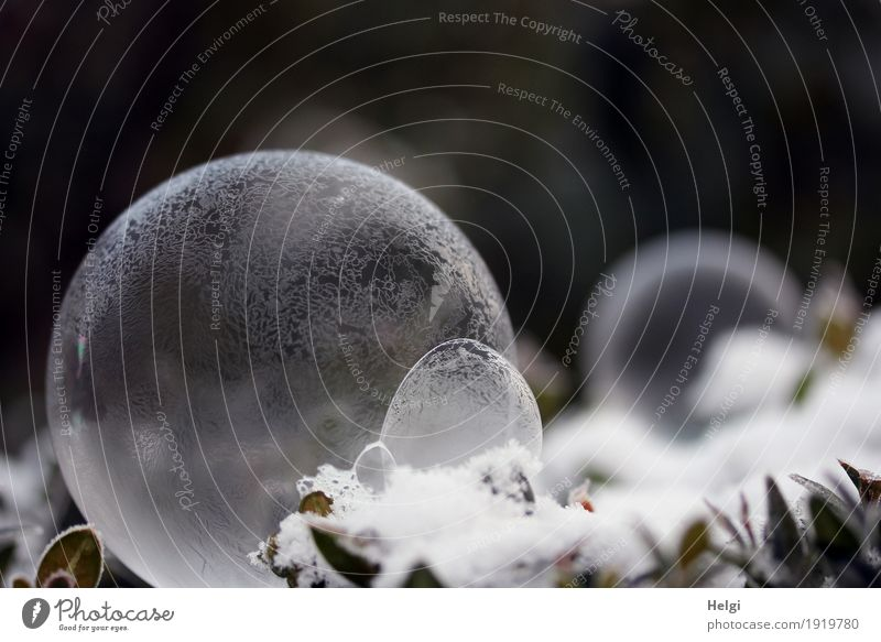 filigree ice art II Nature Plant Winter Ice Frost Snow Leaf Garden Soap bubble Freeze Lie Esthetic Exceptional Beautiful Uniqueness Cold Round Gray Green White