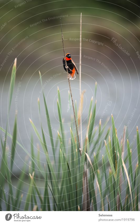 Nature Summer Sun Animal Environment Coast Small Garden Freedom Bird Park Trip Wild animal Lakeside River bank Common Reed