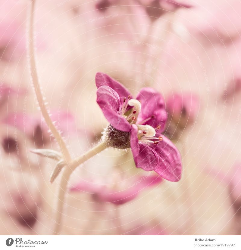 Small pink blossom Nature Plant Summer Beautiful weather Flower Blossom Exotic Garden Park Blossoming Warmth Wild Soft Pink Calm Pistil Blossom leave