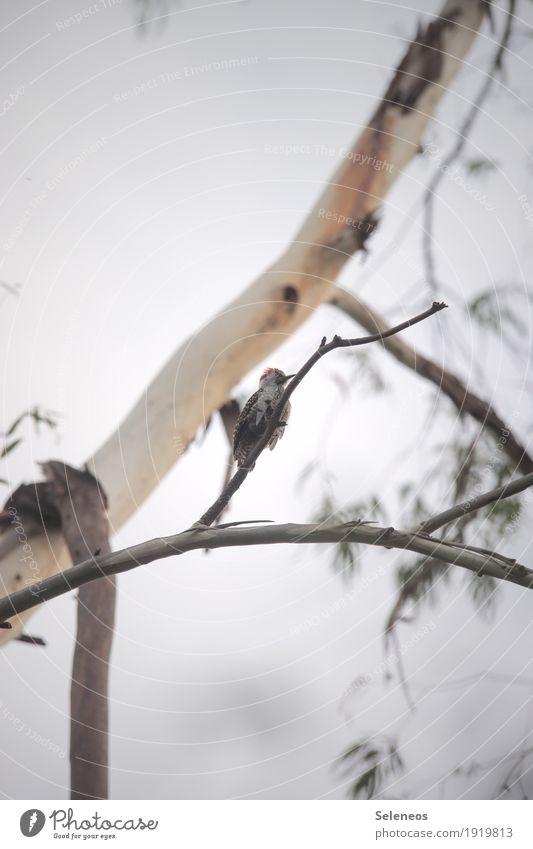Sky Nature Tree Animal Garden Freedom Bird Field Trip Wild animal Wing To hold on Animal face Woodpecker