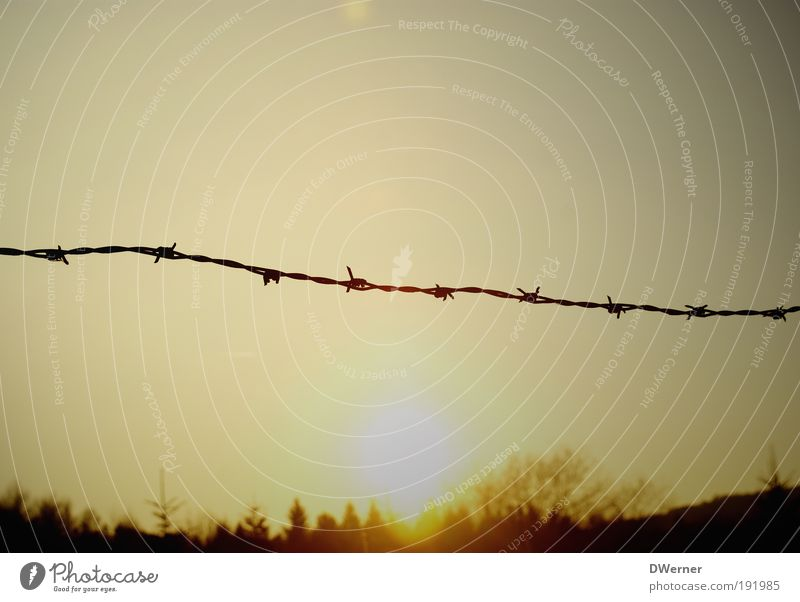 barbed wire for the winter Environment Nature Landscape Plant Sky Sunrise Sunset Sunlight Winter Climate Climate change Beautiful weather Tree Forest Catch Hang