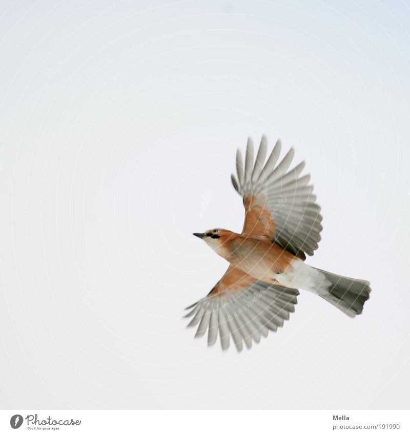 Nature Sky Animal Movement Freedom Air Bright Bird Environment Flying Success Free Wing Natural Wild animal Raven birds