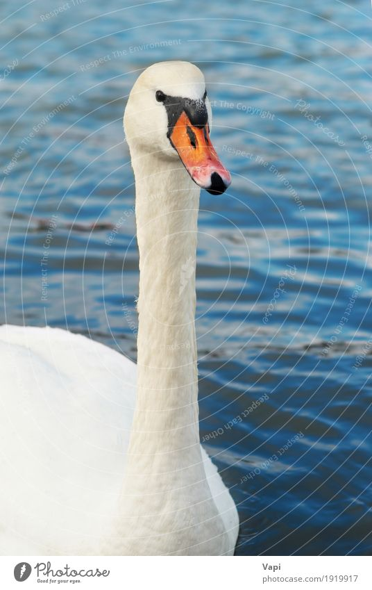 Beautiful white swan Elegant Waves Environment Nature Animal Water Pond Lake River Wild animal Bird Swan Animal face 1 Touch Love Cute Clean Blue Gray Orange
