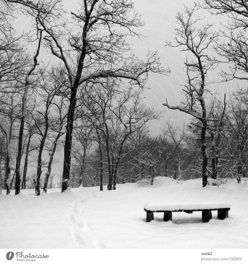 Winter is wishful Snow Winter vacation Hiking Environment Nature Landscape Elements Sky Climate Weather Beautiful weather Ice Frost Park Forest Bench Seating