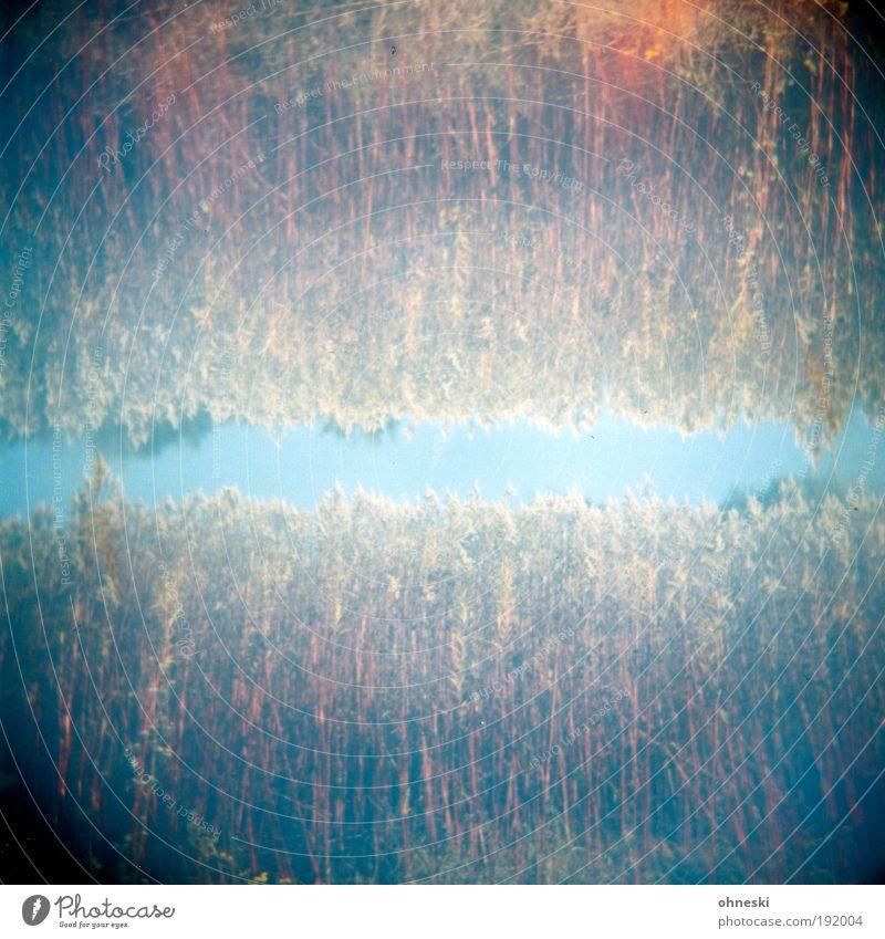 double holds better Environment Nature Landscape Plant Sky Autumn Bushes Blue Red Double exposure Light leak Colour photo Experimental Holga Abstract