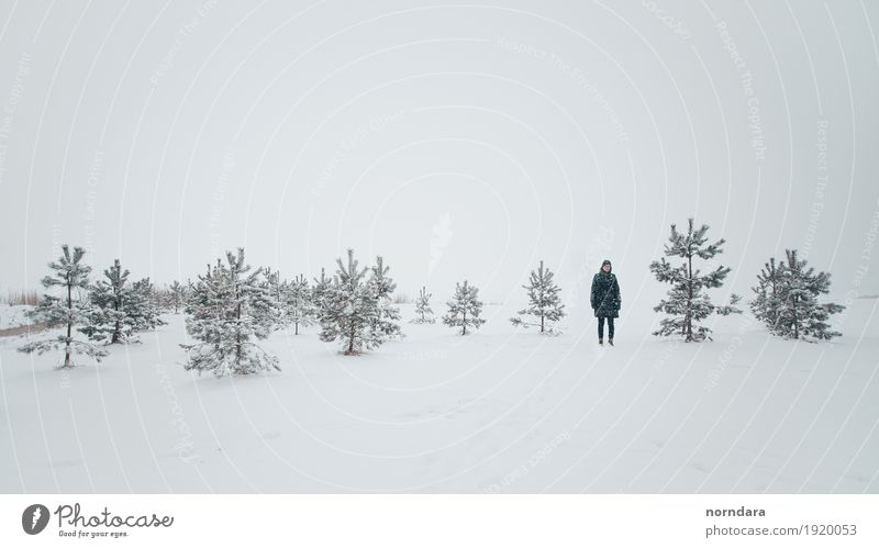 cold winter Nature White Tree Winter Environment Cold Snow Tourism Snowfall Weather Field Air Hiking Ice Empty Frost