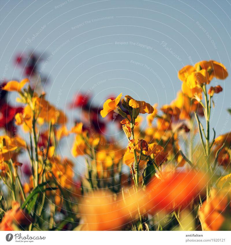 Nature Vacation & Travel Plant Summer Town Sun Landscape Flower Leaf Warmth Environment Yellow Blossom Spring Garden Orange