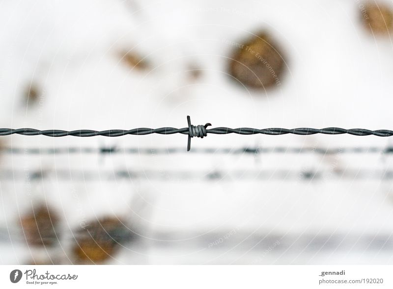 You won't get in here :-( Nature Snow Floor covering Barbed wire Fence Barrier Bright White Captured imprisonment Horizontal Colour photo Deserted