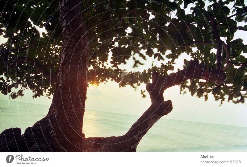 Water Sky Tree Sun Ocean Summer Beach Vacation & Travel Far-off places Freedom Landscape Wait Horizon Island Tourism Longing