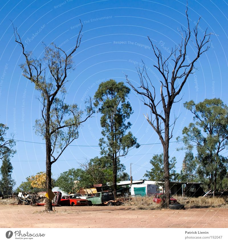 burnt Far-off places Camping Summer Environment Landscape Fire Sky Cloudless sky Climate Climate change Beautiful weather Warmth Drought Tree To dry up Car