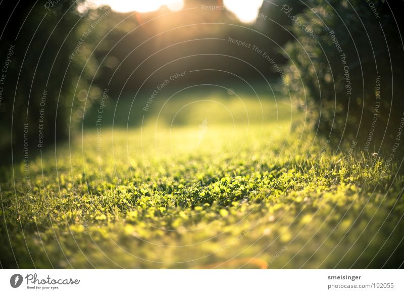 Nature Sun Green Plant Summer Calm Relaxation Meadow Grass Garden Happy Park Warmth Contentment Environment Gold