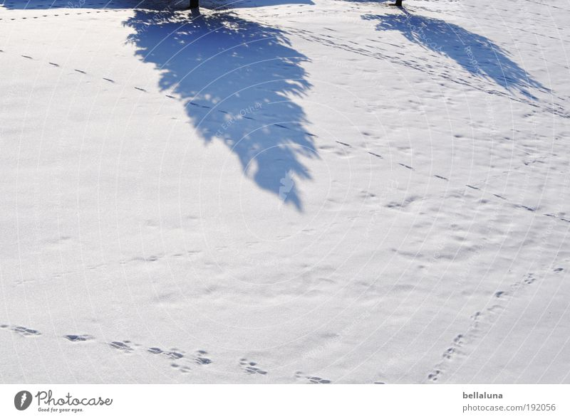 The end of winter casts its shadows ahead. Environment Nature Landscape Winter Climate Weather Beautiful weather Ice Frost Snow Tree Cold Fir tree Tracks
