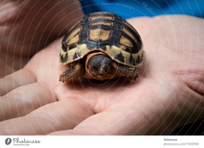 hugging ball Hand Fingers Nature Wild animal Animal face Turtle Tortoise-shell 1 Small Near Natural Close-up Macro (Extreme close-up) Be confident Curiosity