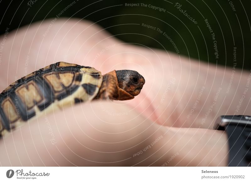 and then I fell in love Hand Fingers Environment Nature Animal Pet Wild animal Animal face Turtle Tortoise-shell 1 Small Near Cute Colour photo Exterior shot