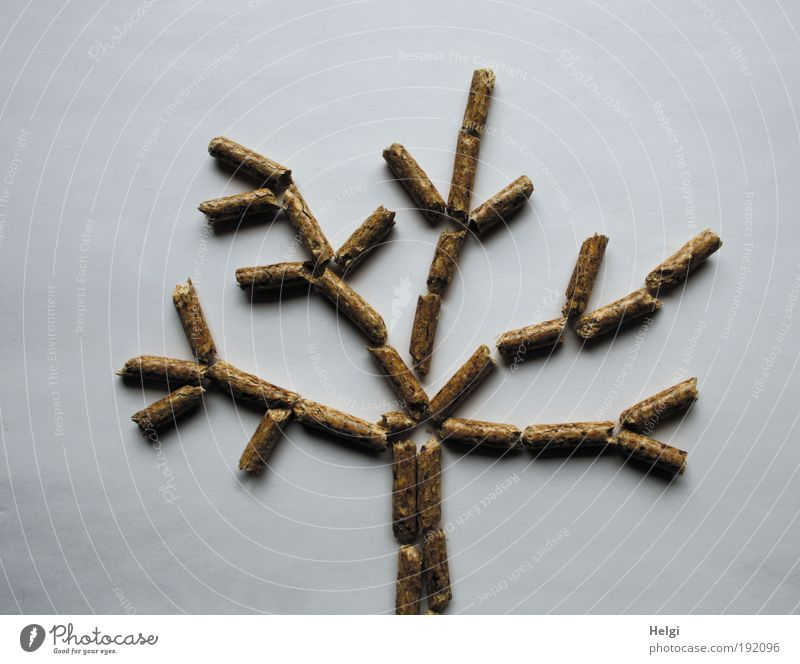 Tree consisting of wood pellets on white background Science & Research Advancement Future Energy industry Renewable energy Environment Nature Winter Climate