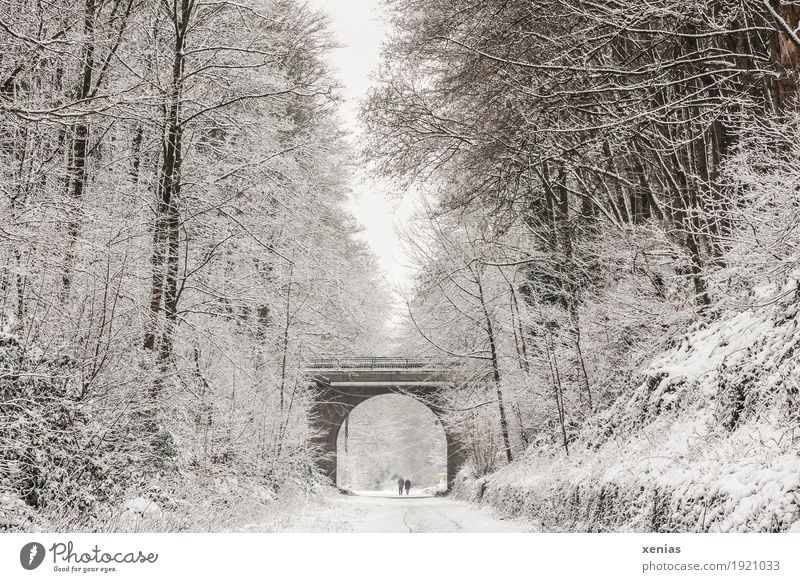 Human being White Tree Winter Forest Black Wall (building) Lanes & trails Snow Wall (barrier) Brown Hiking Bridge To go for a walk Pedestrian far