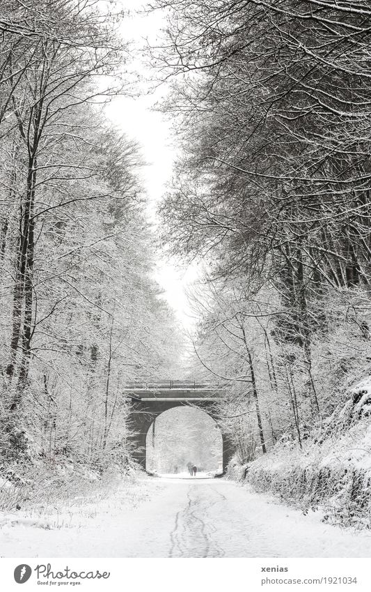 Winter path with trees and bridge Lanes & trails Snow Tree Pedestrian Bridge Hiking Bright Brown Black White Promenade Arch duck Deep depth of field Forward