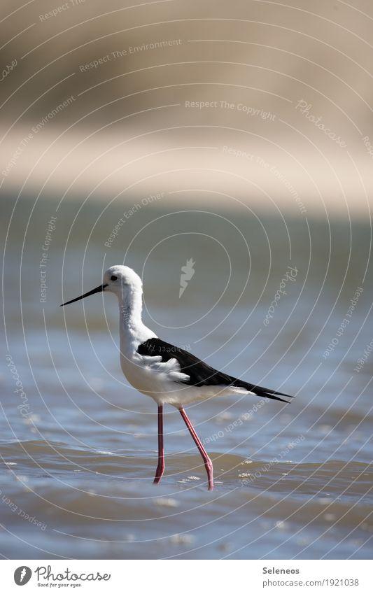 Nature Summer Water Sun Ocean Animal Far-off places Beach Environment Natural Coast Freedom Bird Wild animal Wing