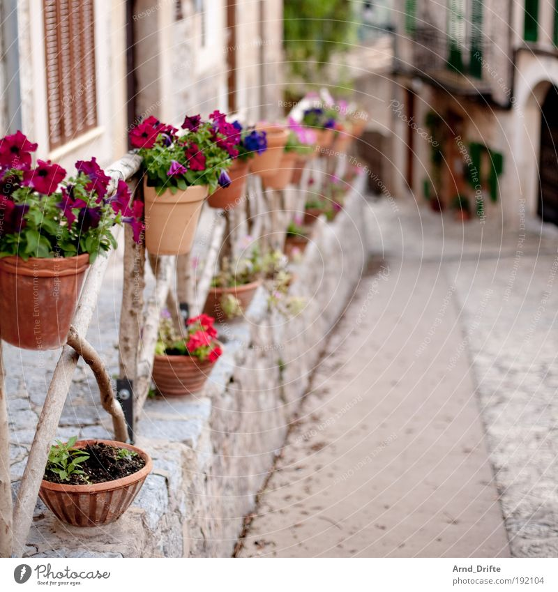 Vacation & Travel Style Background picture Trip Garden Village Under Balcony Terrace Plant Majorca Spain Alley Copy Space Flair Pot plant