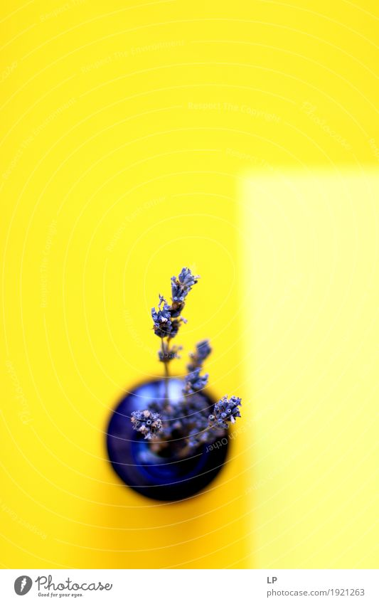 lavender on yellow background Lifestyle Luxury Elegant Style Design Exotic Joy Leisure and hobbies Living or residing Flat (apartment)