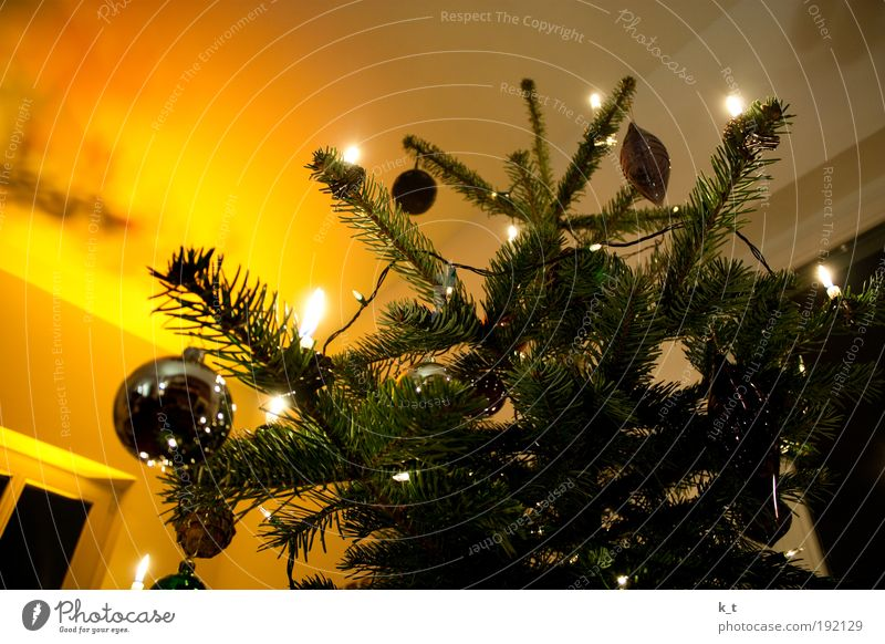 Christmas & Advent Winter Yellow Warmth Bright Moody Glittering Candle Romance Decoration Fir tree Culture